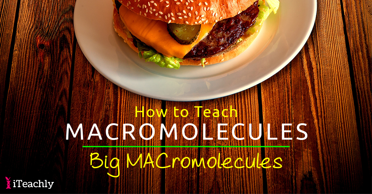 How to Teach Macromolecules - Big MACromolecules - Worksheet