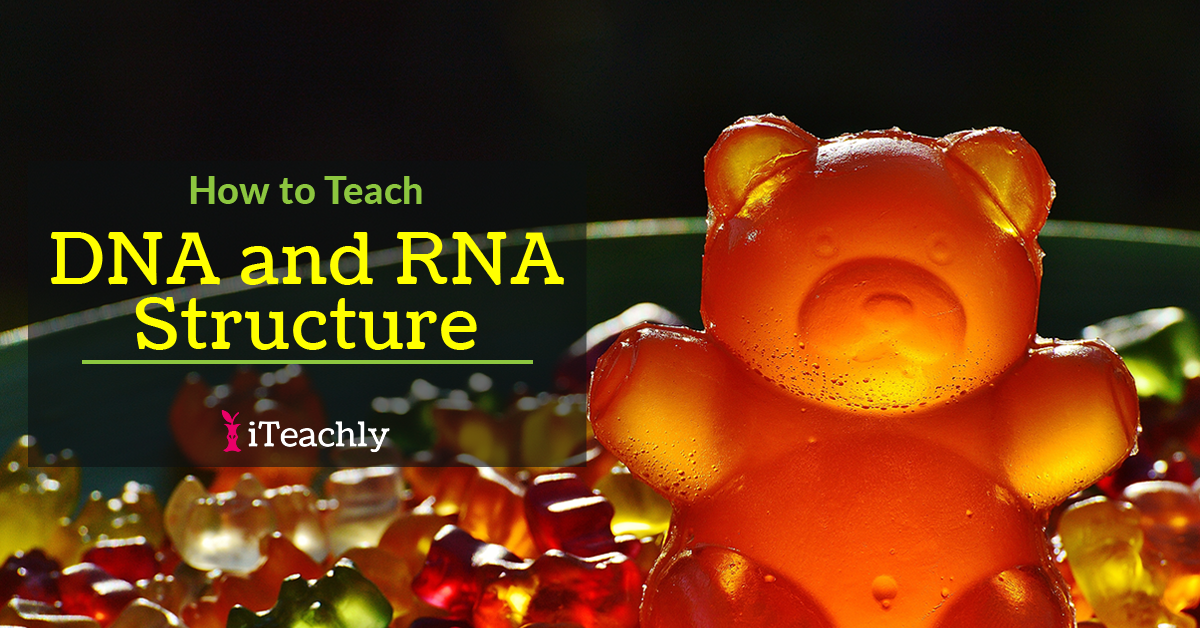 Modeling DNA and RNA Structure with Gummy Bears
