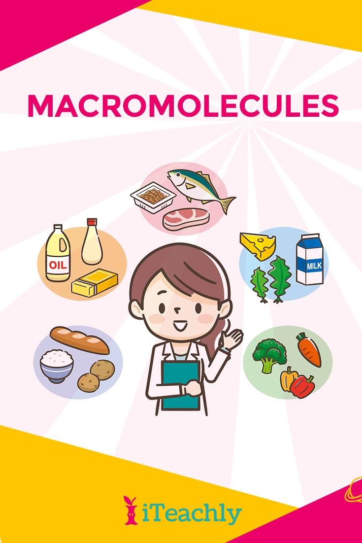 Nitrogenous Base, Sugar, Phosphate, Macromolecules