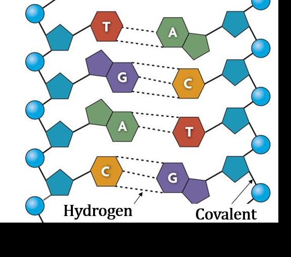 Hydrogen Bond, Covalent Bond, Chemistry of Life