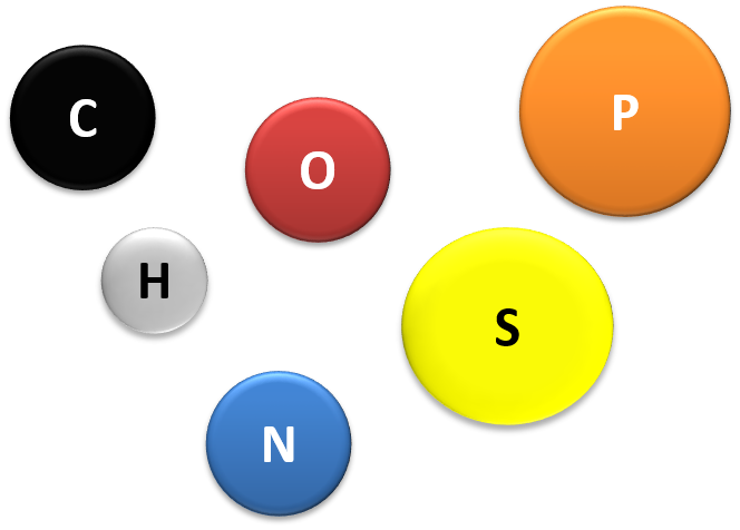 The main elements found in living things are, Carbon (C), Hydrogen (H), Oxygen (O), Sulfur (S), Nitrogen (N), Phosphorous (P)